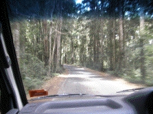 driving through forest