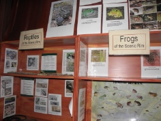 reptiles and frogs