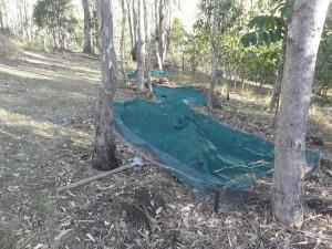 prepare germination plots