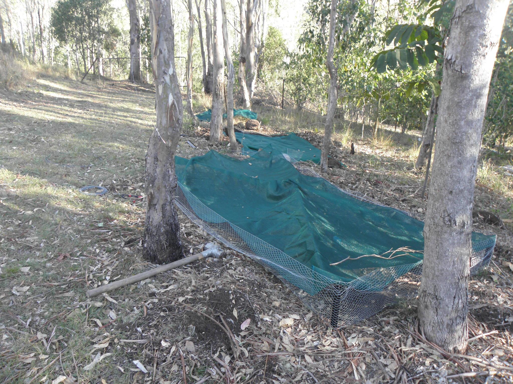 how to prepare a codical australia