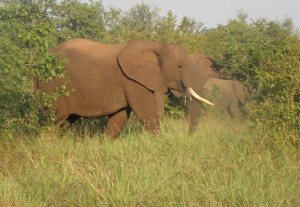 Some elephants we drove past in Kruger NP in 2010.