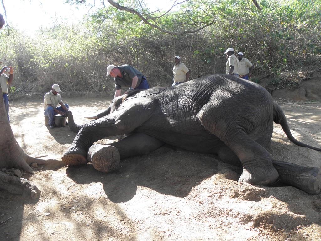 ElephantWhispers8LieDown