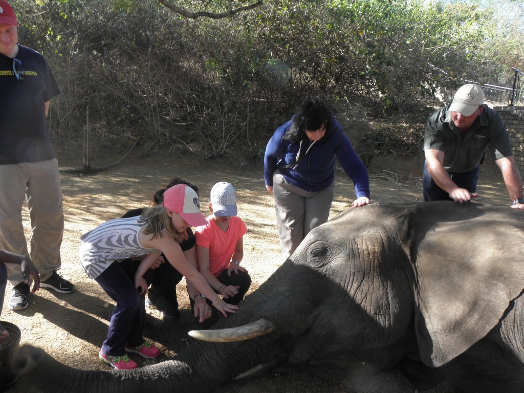 ElephantWhispers9TouchHead