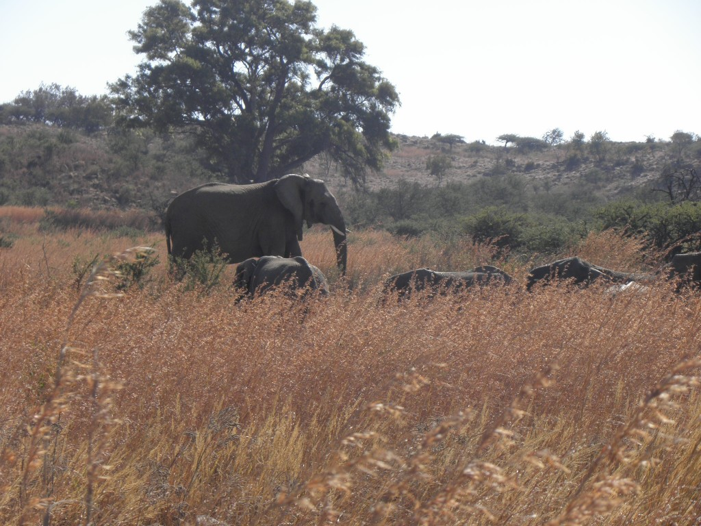 NambitiElephants
