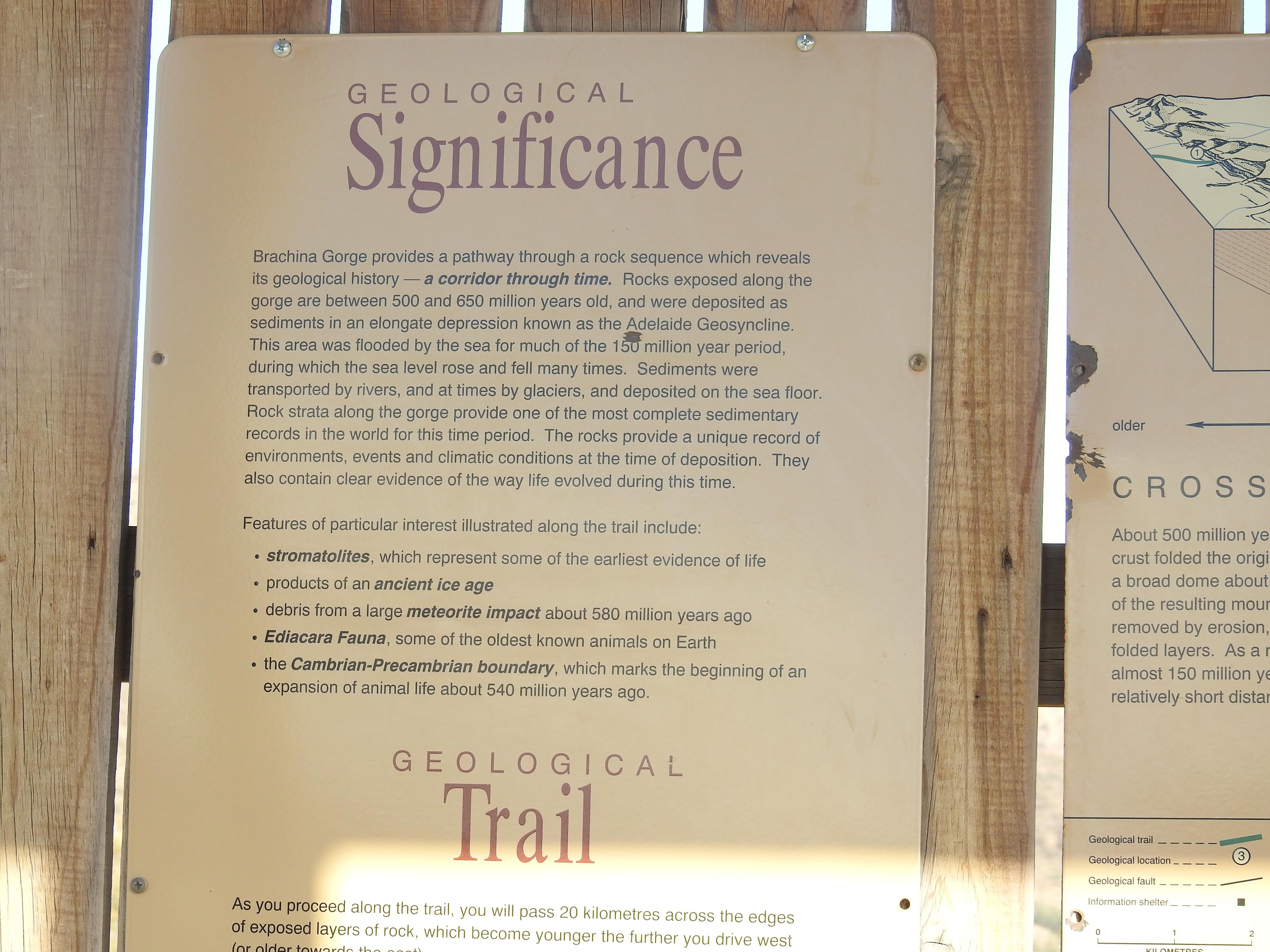 BrachinaSignificance