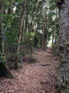 Rainforest track
