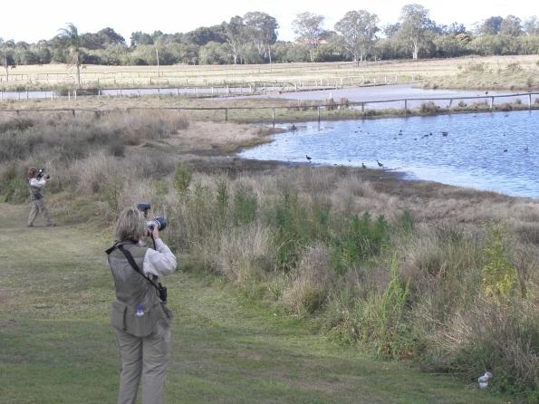 Birdwatching at Eagleby